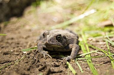 Toad_copy