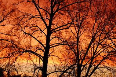Sunrise_trees