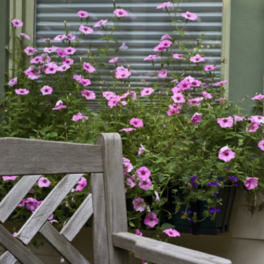 Window_bx_petunias_copy